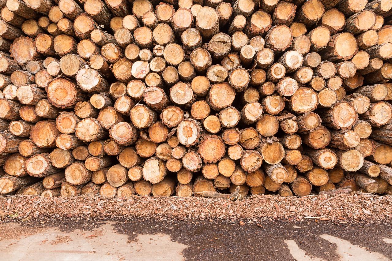 Aserraderos de Villaviciosa Córdoba madera en Córdoba